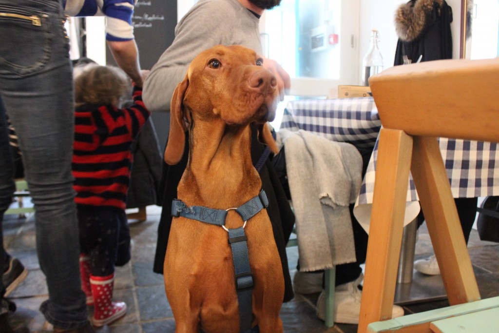 Dog in Pupp Cafe