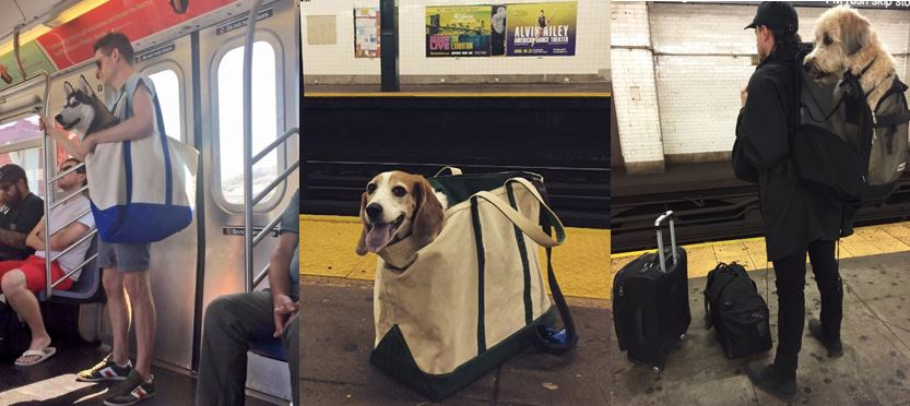 Dogs in Carrier Bags on NYC Subway
