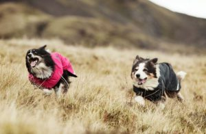 The Hurtta Summit Parka Dog Coats
