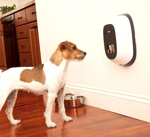 Petchatz Remote Camera
