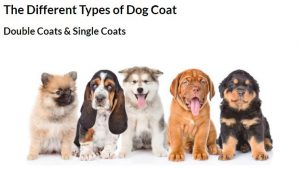 The Different Types Of Dog Coats