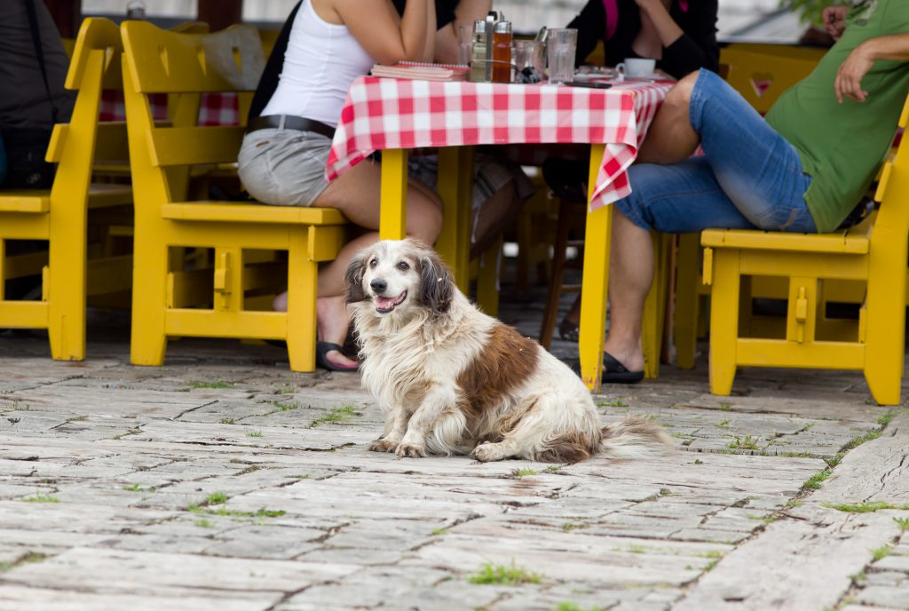 Dogs in Restaurant
