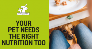 Online Pet Nutrition Course by Holly & Hugo