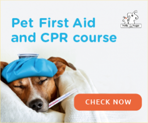 Pet First AID & CPR Course by Holly & Hugo