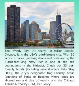 Family & Pet-Friendly Destination Guide to The Windy City Chicago Illinois