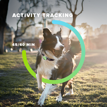 Top 10 Dog Activity Trackers and Fitness Monitors