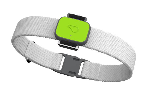 Whistle FIT Smart Dog  Activity & Fitness Tracker